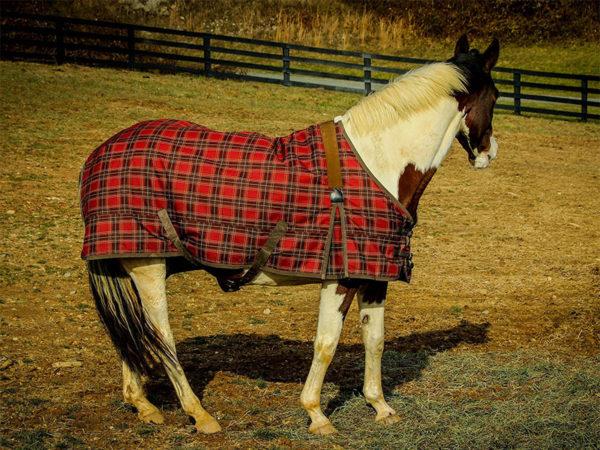 Pferdedecken-Reinigung-Algermissen